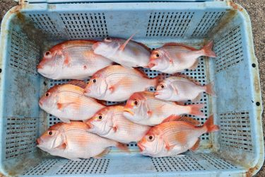 "Popular fishing experience ""Eisemaru"" in Ine"