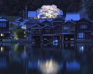 伊根の春を楽しもう!海蔵寺の桜
